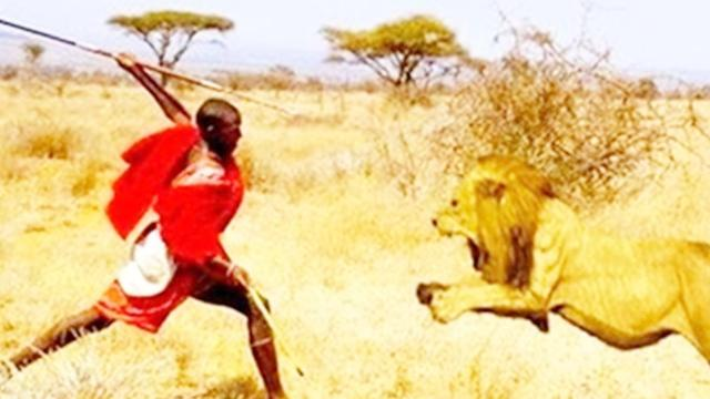 比开挂民族还厉害的人类群体,正面和狮子抢食物,狮子:惹不起|群体构建