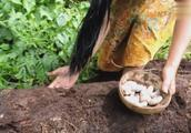 原始森林美食—在腐烂树干里找到很多美味大虫子,煮起来吃