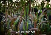 红高粱:余占鳌被包围了,躲进了苞米地,不料却看到惊人一幕