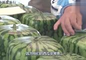 日本人懵了!日本卖天价的西瓜中国餐厅免费送:我们要去中国!