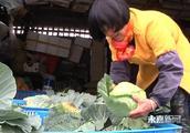 德亨农业:发展定制农业 打造农业新模式
