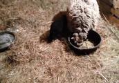 羊妈妈和它的孩子一只小萌羊宝宝还有它们的近邻居一匹大马