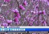 500亩桃花迎春绽放,花儿朵朵灿若红云,映红了山头