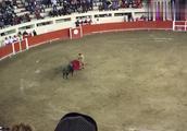 经典西班牙斗牛!斗牛士一个举动,全场沸腾,太精彩