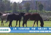 """上海:九匹骏马清晨""""开溜""""马路上逆行""""撒欢"""""""
