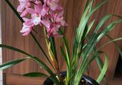 自养兰花,不同于春兰的清秀,也是美的让人沉醉