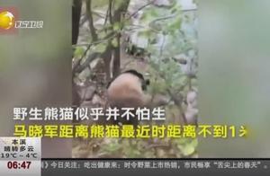 """陕西:邮递员上班途中偶遇野生大熊猫,""""国宝""""有点懵"""