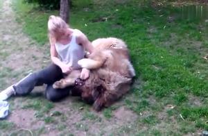 小姐姐和她的高加索犬,这么大的狗狗还这么会撒娇