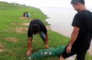 农村小伙收鱼笼,有鱼有虾,还意外收获一条大鲫鱼