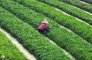 独家追踪|腾讯联创投了个农业项目 专注农业大数据分析服务