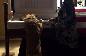 狗狗趴在棺材边,轻轻舔了主人一口,为什么主人不理我呢?