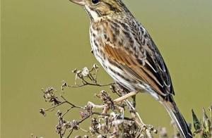 鸟的寿命不长,为什么几乎见不到鸟死去的尸体?