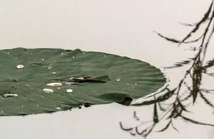 莲花拍摄技巧——匠影禅心作品欣赏