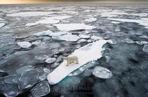 无意中拍到在北极海冰上流浪的北极熊…然后入围了国际摄影大赛