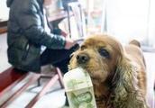 狗狗会自己带钱去小卖部买吃的,还会帮主人带烟回来,太可爱了!