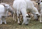 """生肖羊:真凭实据:属羊人有""""三喜""""!"""