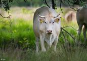 11月下旬好运来袭,牛牛牛可谓龙腾万里,扶摇直上