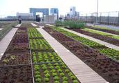 """都市也是农业发展的""""黄金区""""!一些人已经靠这些富起来了!"""