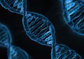 寻找干细胞科技的前沿,不在剑桥,而是在深圳