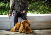 恒隆广场不牵绳遛狗没人管?保安表示:听就最好,不听也没办法