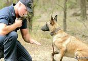 藏獒是战斗力最强的狗,为什么解放军不愿让它当军犬?