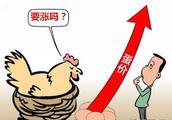 鸡蛋价格为何急转直下?!还有没有反弹空间?