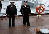 航母上老鼠泛滥怎么办?美军养猫、用高科技,中国办法最高明