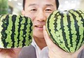 有一种奢侈品,叫做日本天价水果!