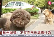 网传杭州城管存在虐狗打狗行为?杭州城管凌晨公开辟谣:勿谣传!