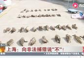 """绝不姑息!上海破获夫妻档非法捕猎案,坚决向非法捕猎说""""不""""!"""