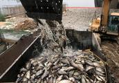 伊拉克突现大量死鲤鱼 水污染加剧可能是祸首