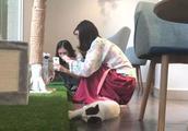 撸猫有风险!宠物咖啡店卖萌治愈背后的安全隐患你意识到了吗?
