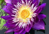 番禺莲花山,全球最名贵的莲花这都有