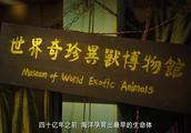 世界奇珍异兽博物馆,原来旺财不是狗,是长白山吊晴白额虎,精辟