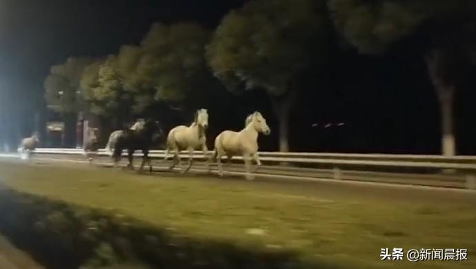 """上海:九匹骏马公路上""""撒欢""""被民警送回"""
