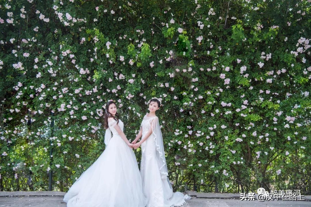 汉中花果山的蔷薇花开啦!快去拍照打卡喽!