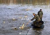 流口水!武汉这所大学师生下湖捕鱼捞了3万斤,当场开起全鱼宴